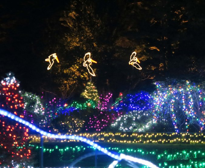 Pelicans at Oregon's Shore Acres' State Park Holiday of Lights display.