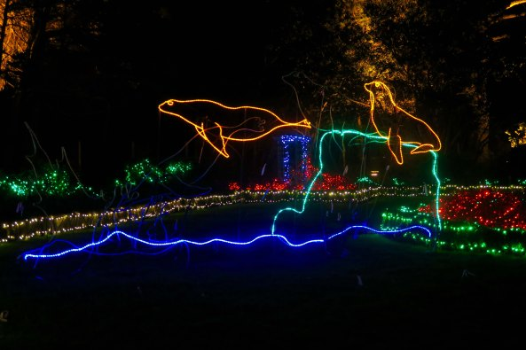 Seals dive int the water at Oregon's Shore Acres' State Park Holiday of Lights display.