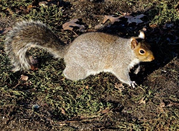 A fat squirrel.