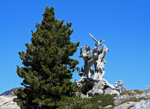 Snag in the Five Lakes Basin .
