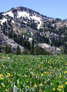 The Granite Chief Wilderness in the Sierra Nevada Mountains north of Lake Tahoe.