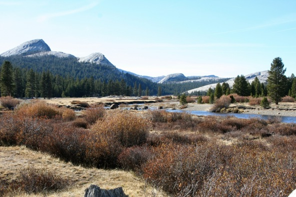 Tuolumne Meadows in the summer.