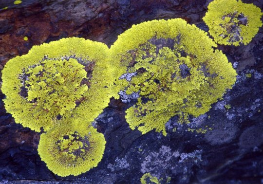 Lichens add color along the trail as well.