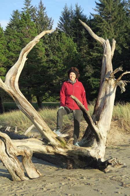 Dead tree with impressing root system on Sunset Bay near Coos Bay on the Oregon Coast.