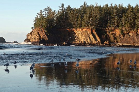 Seagulls and sunset at Sunset Bay near Coos Bay on the Oregon Coast.