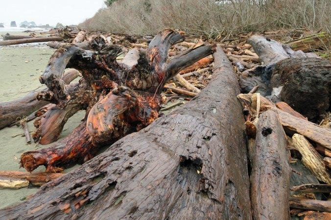 Drift logs at Harris Beach State Park on the Oregon Coast.