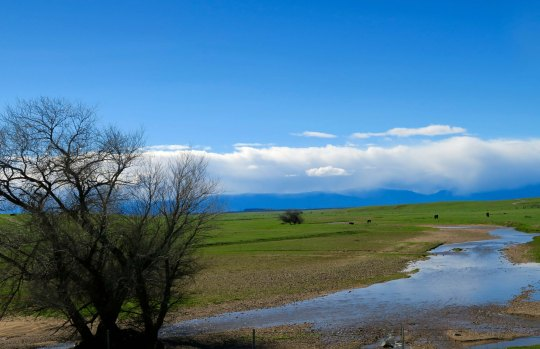 The Central Valley was showing signs of spring.