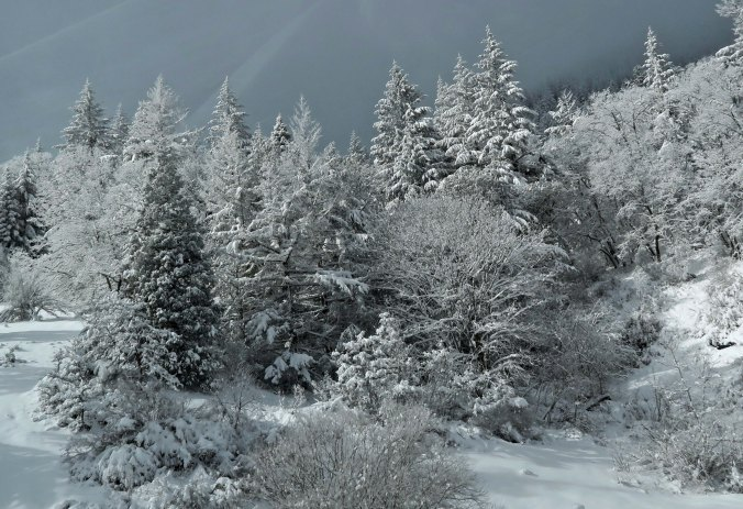 I had the first shift driving, so Peggy used my camera to get these shots of the Siskiyou Pass.