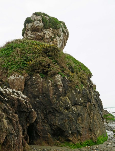 Turtle-like rock at Harris Beach State Park near Brookings, Oregon.