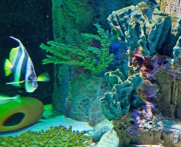 Something Fishy The Sealife Aquarium In Charlotte North