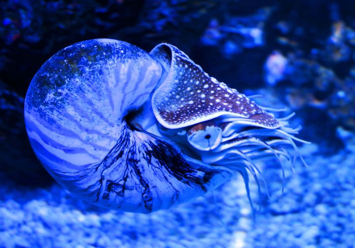 Something Fishy… The Sealife Aquarium in Charlotte, North ...