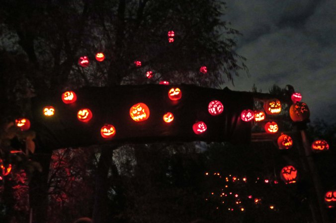 50 plus pumpkins out of 5,000 at Jack-o-Lantern Spectacular in Providence, RI