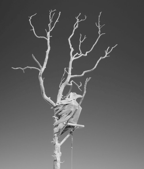 Crow in Black and White, Sysimetsä at Burning Man 2017