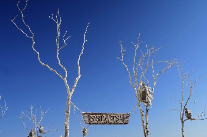Crows in trees, Sysimetsä at Burning Man 2017