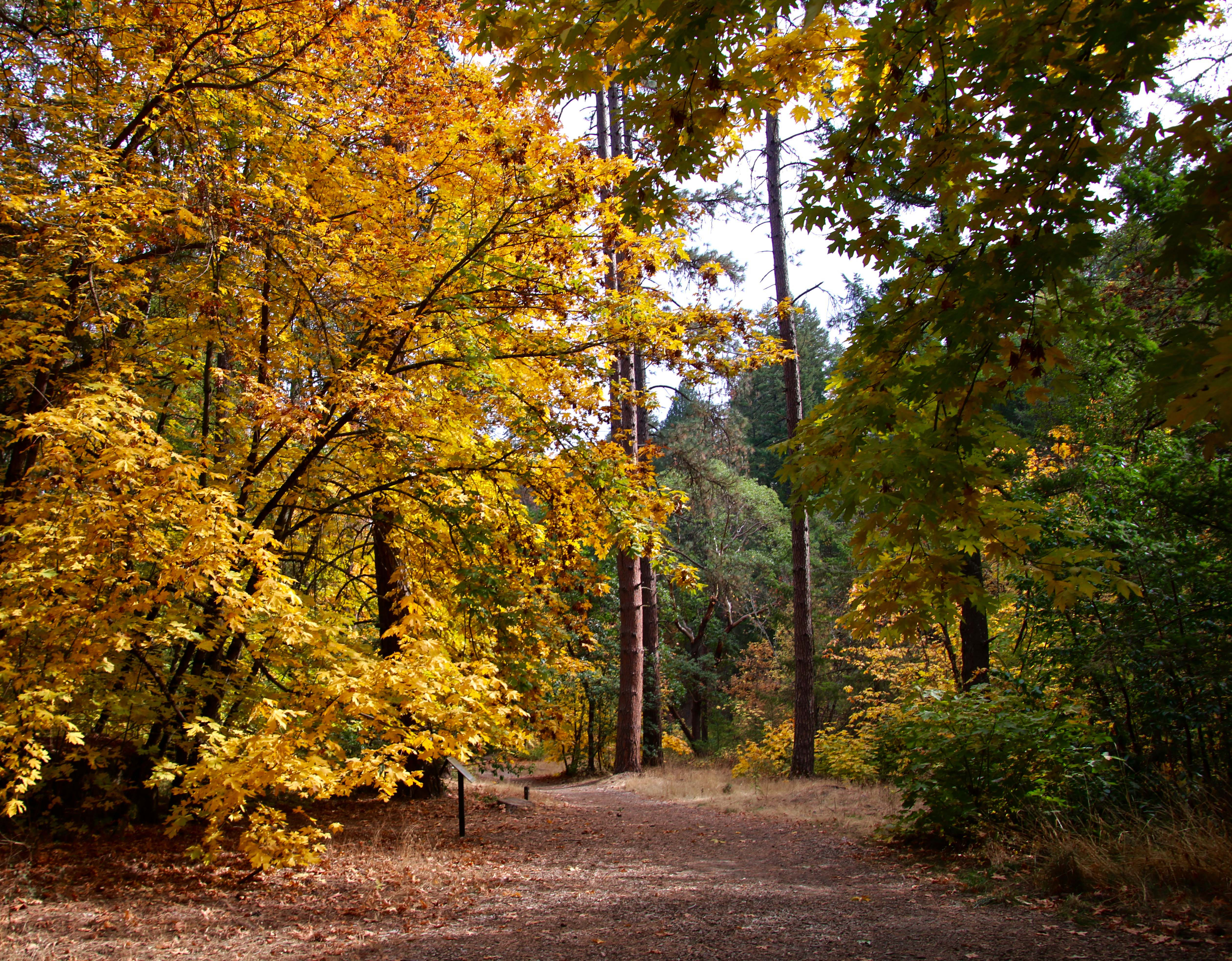 Fall colors along Jacksonville Trail in Oregon
