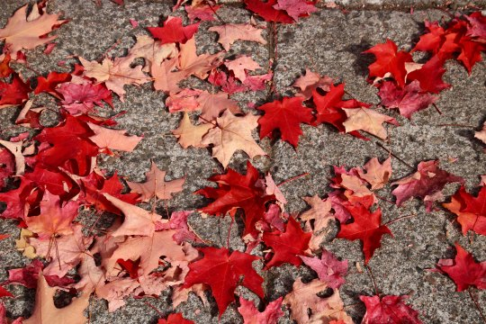Fall leaves on sidewalk in Jacksonville, Oregon