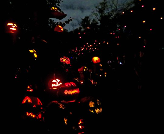 Many pumpkins at Jack-o-Lantern Spectacular in Providence
