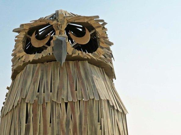 Múcaro close up, Burning Man 2017