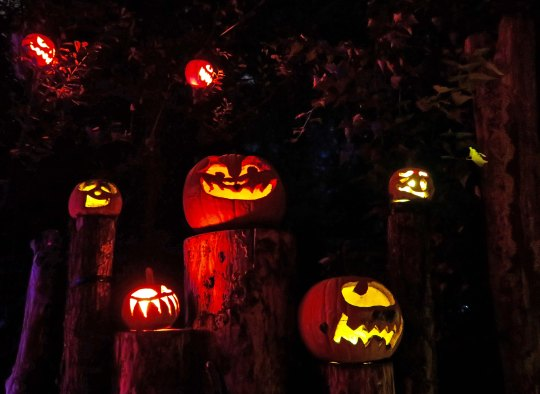 Pumpkins on stumps at the Jack-o-Lantern Spectacular in Providence, RI