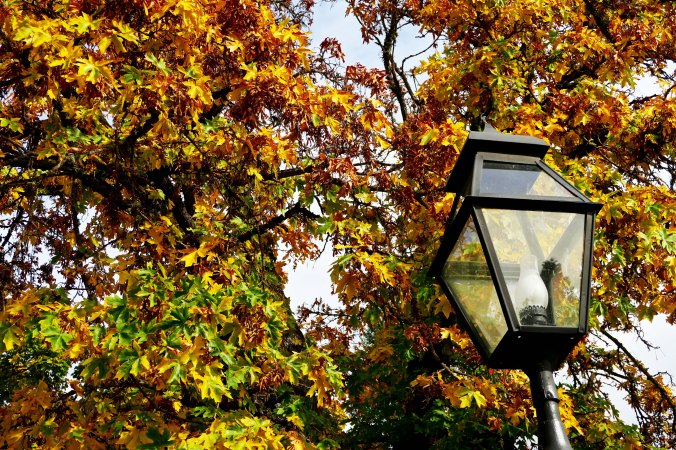 Street lamp and fall cors in Jacksonville, Oregon