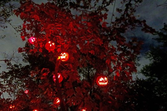 Treed pumpkins at the Jack-o-Lantern Spectacular in Providence, RI