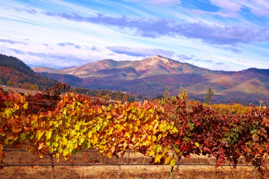 Valley View Winery in Applegate Valley, Oregon