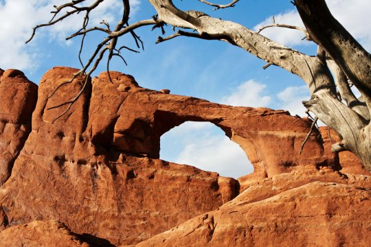 Skyline Arch and tree at Arches NP