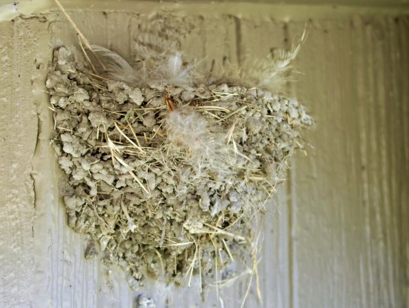 Swallow nest at Captain Jacks Stronghold