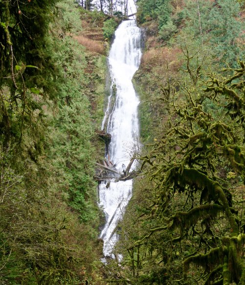Munson Creek falls in the coastal mountains near Tillamook, Oregon. Photo by Curtis Mekemson.