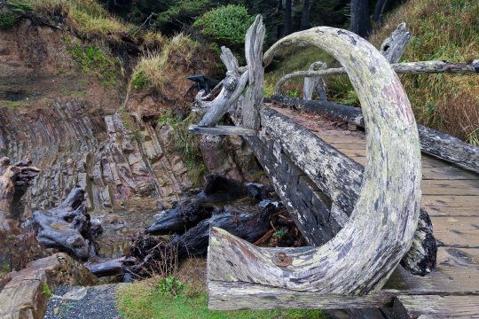 Photo of a bridge made out of driftwood by Curtis Mekemson.