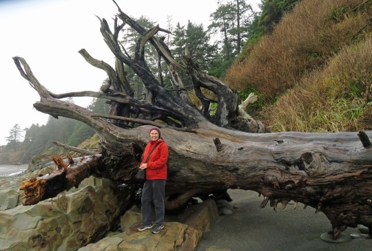 Driftwood log on Beach Five, Olympic National Park