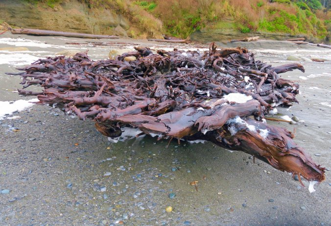 Driftwood roots on Beach Five in Olympic National Park