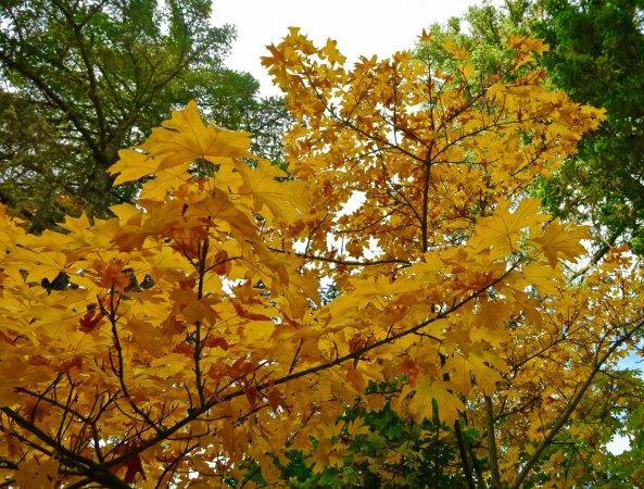 Fall at home