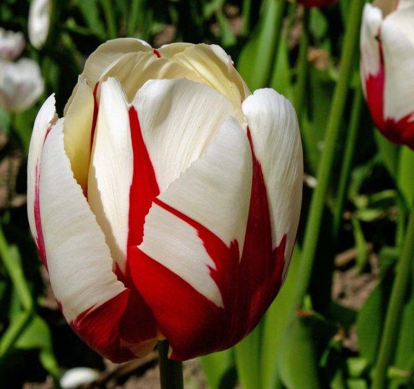 Flower 1 at Chatsworth