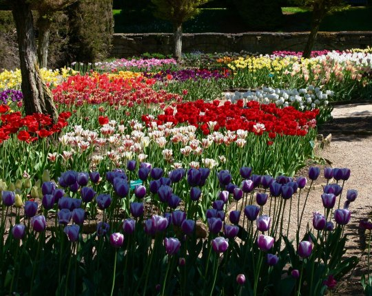 Flower garden at Chatsworth