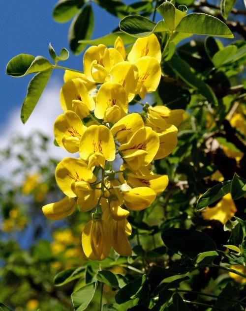 Flowers 11 at Chatsworth
