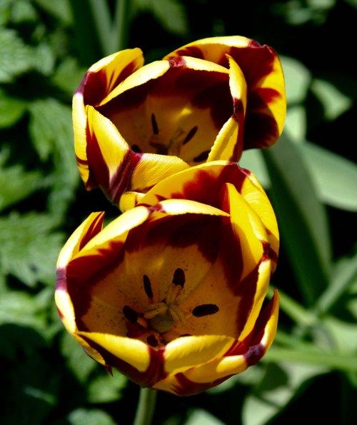 Flowers 14 at Chatsworth