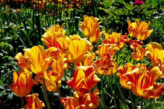Flowers 15 at Chatsworth
