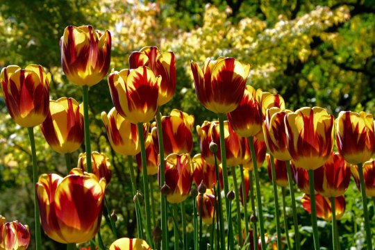 Flowers 16 at Chatsworth