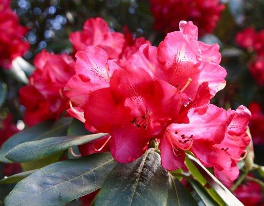 Flowers 8 at Chatsworth