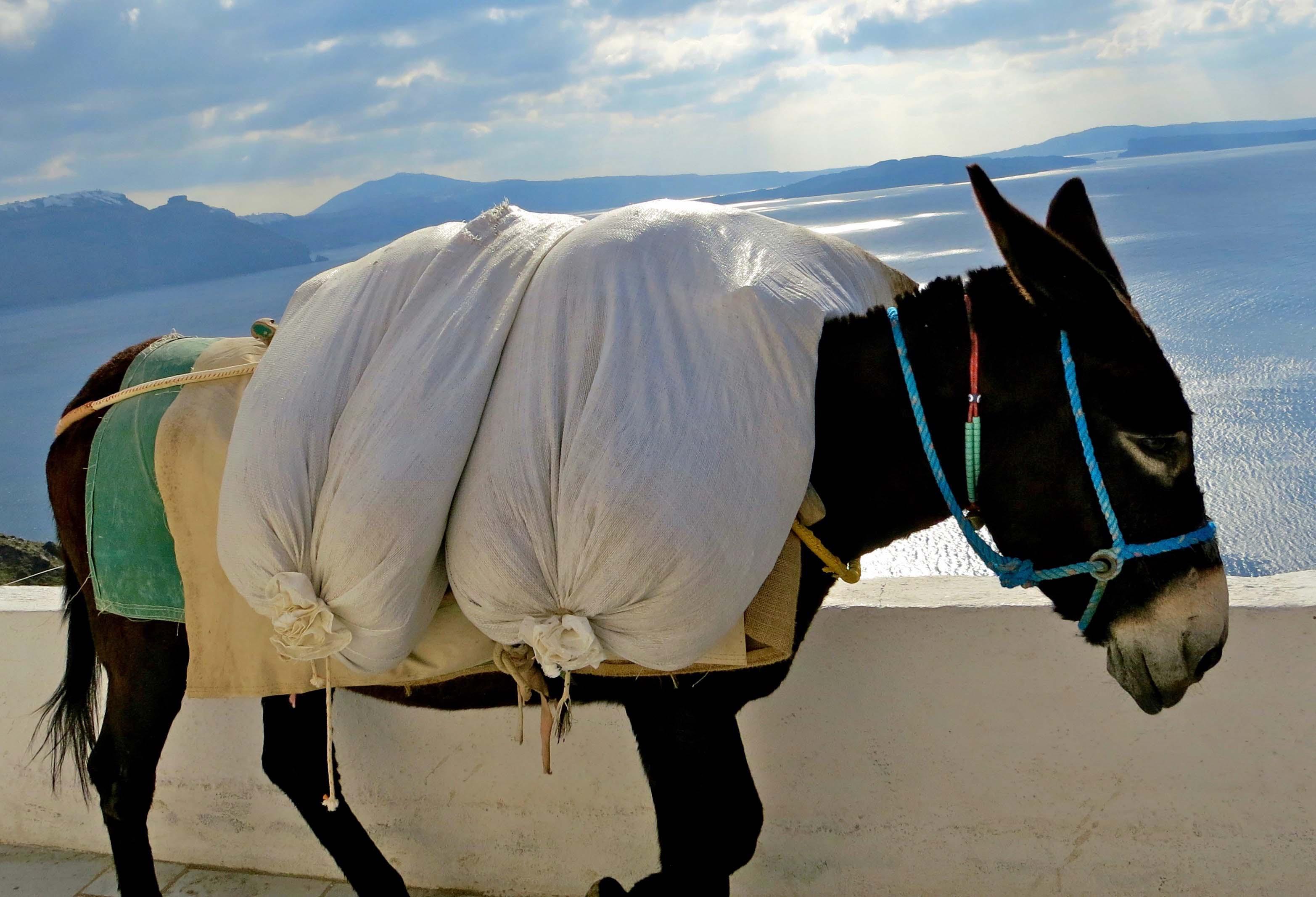 Photo of heavily laden mule on the Greek Island of Santorini by Curtis Mekemson.