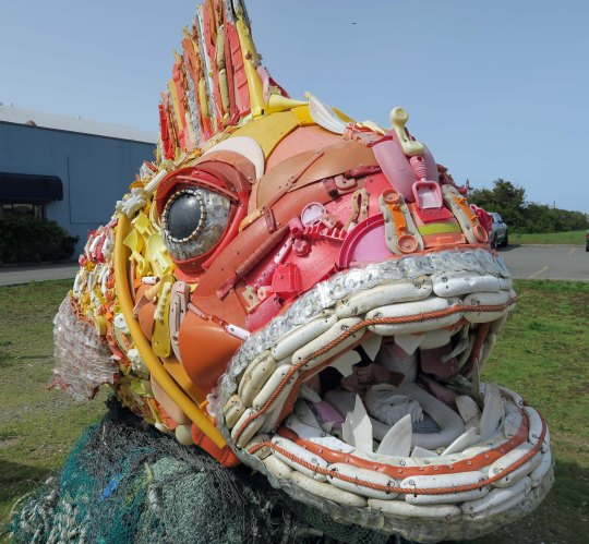 Ocean trash fish at Bandon, Oregon