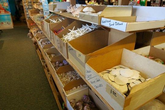 Seashells for sell at Flamingo Jim's in Rockaway Beach, Oregon.
