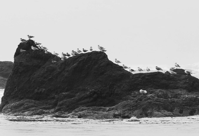 Seagulls outline rock at Ruby Beach in Olympic National Park