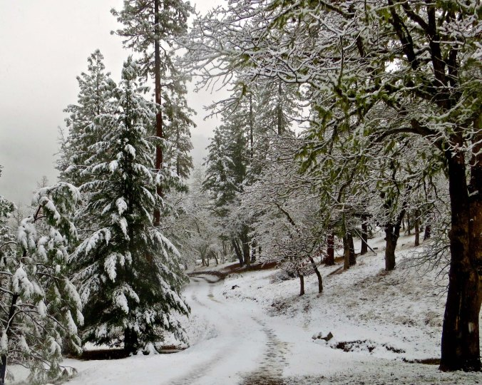 The road to the Mekemson home in winter