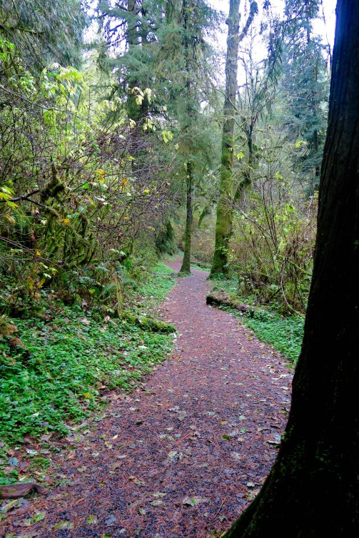Trail to Munson Creek Falls near Tillamook, Oregon. (Photo by Curtis Mekemson.)