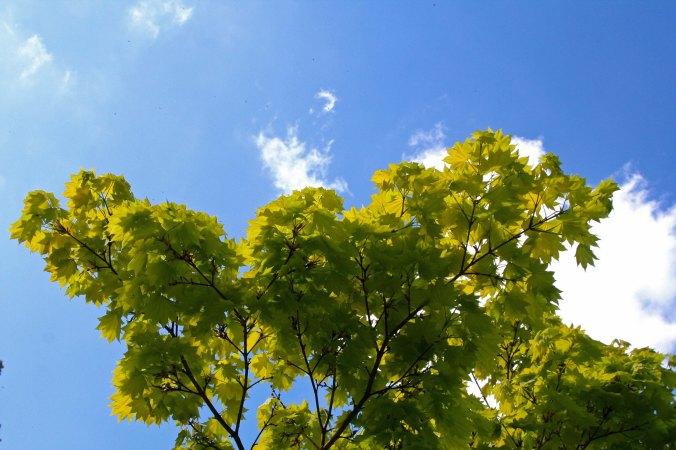 Tree at Chatsworth
