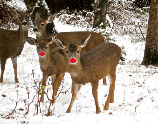 Rudolph's kids