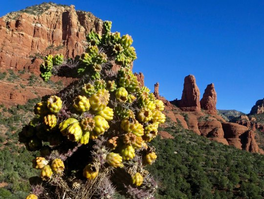 Cactus and twin rocks in Sedona