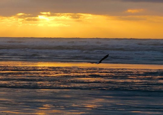 Copalis beach sunset in Washington